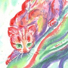 Rainbow cats